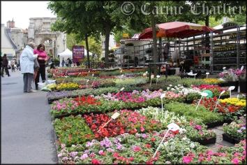 Marché aux fleurs / © Carine Charlier © www.clic-et-plume.com